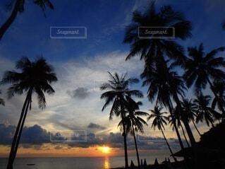 空,屋外,太陽,朝日,ビーチ,雲,砂浜,海岸,樹木,正月,ヤシの木,お正月,日の出,新年,初日の出,整列,草木,パーム,ナツメヤシ,ババス