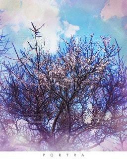 空,桜,木,雲,樹木