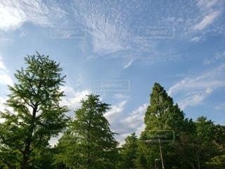 自然,空,木,屋外,雲,樹木,草木
