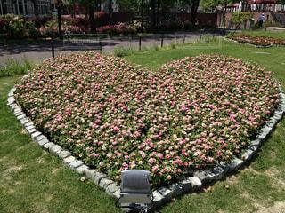 花園のクローズアップの写真・画像素材[2306694]