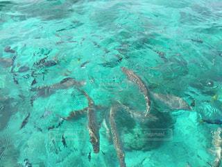 魚の餌付けの写真・画像素材[2340912]