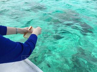 魚の餌付けの写真・画像素材[2340926]