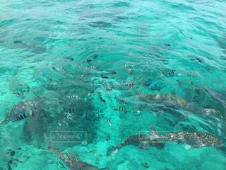 魚の餌付けの写真・画像素材[2340927]