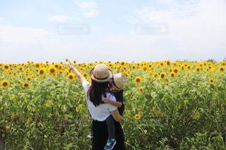 ひまわり畑と麦わら帽子の親子の写真・画像素材[3483803]