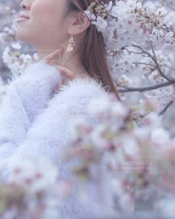 春爛漫🌸♡の写真・画像素材[3265193]