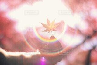虹色の光に包まれて🍁🌈の写真・画像素材[3736708]