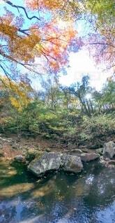見上げた空に紅葉ハート♡♡♡の写真・画像素材[3866484]