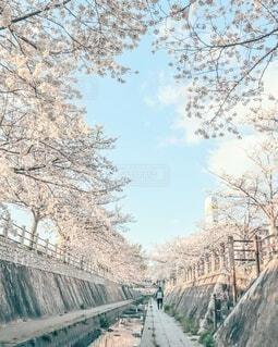 青空と桜♡🌸♡の写真・画像素材[4310473]