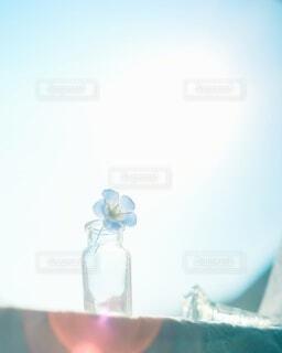 ネモフィラを飾る暮らし💙🤍の写真・画像素材[4310472]