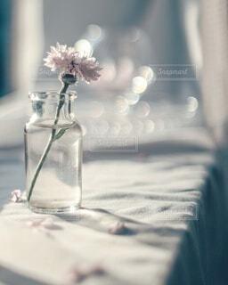 ♡可愛いお花♡の写真・画像素材[4348304]