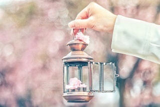 ♡可愛い牡丹桜♡の写真・画像素材[4348303]