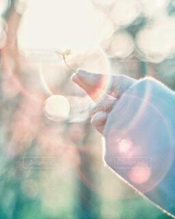 ♡可愛い菜の花♡の写真・画像素材[4348301]