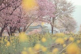 春の詰め合わせ♡菜の花、八重桜、桃、ソメイヨシノ🌸の写真・画像素材[4348358]