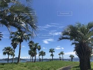 快晴の空と透き通る海の写真・画像素材[2340868]