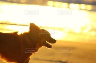 光かがやく海と犬の写真・画像素材[2642160]