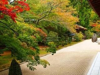 高野山の秋の写真・画像素材[2663152]
