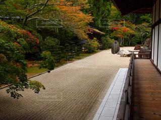 和風庭園の写真・画像素材[2986466]