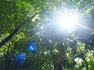 木漏れ日の写真・画像素材[2986520]