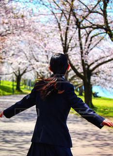 満開の桜と少女の写真・画像素材[3076522]