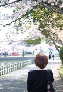 春の散歩の写真・画像素材[4222693]