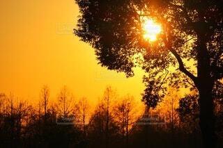森の夕陽の写真・画像素材[4820810]
