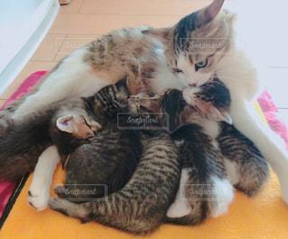 お互いの上に横たわっている猫の写真・画像素材[2369257]