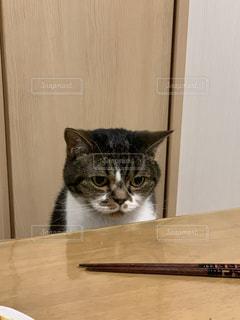 木製のテーブルの上に座っている猫の写真・画像素材[2311344]