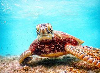 水の下を泳ぐカメの写真・画像素材[2353307]