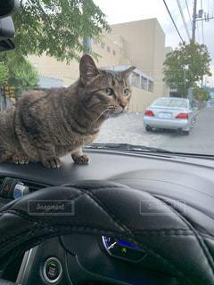 車の上に座っている猫の写真・画像素材[2319763]