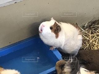 茶色と白の動物の写真・画像素材[2319893]