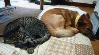 ベッドに横たわる猫の写真・画像素材[2324226]
