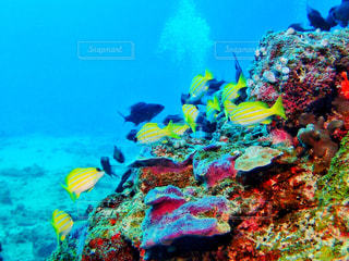 水の中の魚の群しの写真・画像素材[2358497]