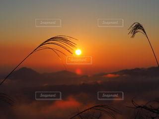 空,屋外,太陽,雲,夕暮れ,かっこいい,霧,影,シルエット,光,日の出,くもり,景観,日中,神々しい,すすき,美しさ,設定,りんとした