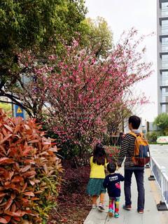 親子で散歩の写真・画像素材[2364129]