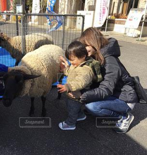親子と羊の写真・画像素材[2363971]