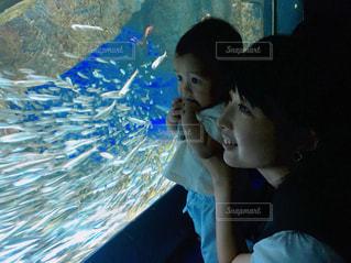 はじめての水族館の写真・画像素材[2366095]