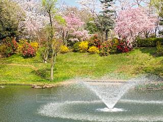 花,ピンク,樹木