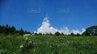ソフトクリームみたいな雲の写真・画像素材[2422871]