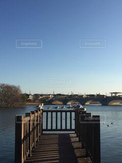 公園,鳥,散歩,池,渡り鳥,豊橋,幸公園,みゆき公園