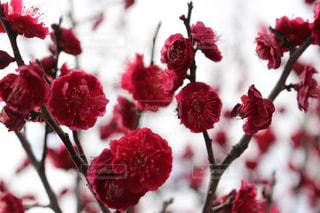 花の写真・画像素材[552611]