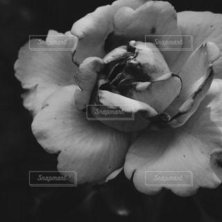 花を持っている人 - No.820186