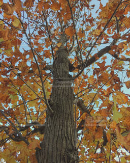 近くの木のアップの写真・画像素材[845111]