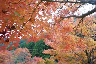 大きな木の写真・画像素材[845113]