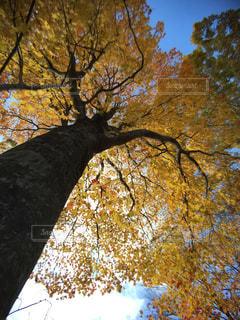 近くの木のアップの写真・画像素材[845114]