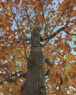 近くの木のアップの写真・画像素材[872401]