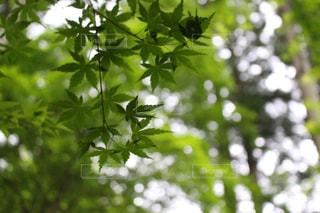 木の枝にとまった鳥 - No.995470