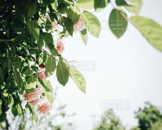 近くの植物のアップの写真・画像素材[1162456]