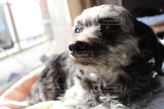 その口を開いて犬の写真・画像素材[1187586]
