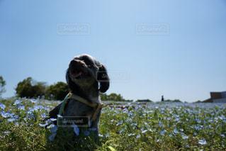花と愛犬の写真・画像素材[1187930]