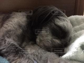 ベッドの上で横になっている茶色と白犬の写真・画像素材[1187932]
